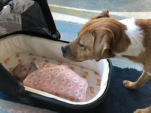 Annie's Birth Story