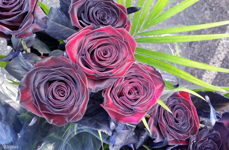 black-baccara-roses-bouquet