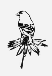 """Goldfinch on Coneflower, hand cut paper on paper, 7"""" x 5"""", Sold"""