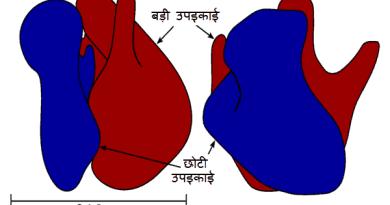 राइबोसोम के प्रकार (Types of Ribosome )