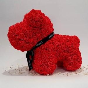 Red rose dog long