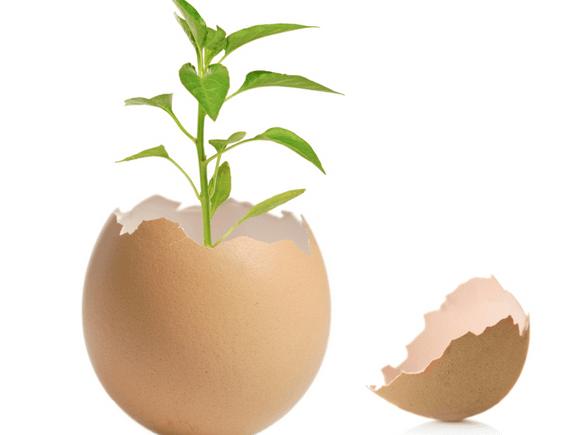 seedling ventures