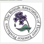 pansy-touchwoodplants.co.uk