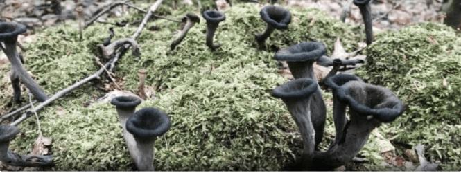 fantastic fungi facts
