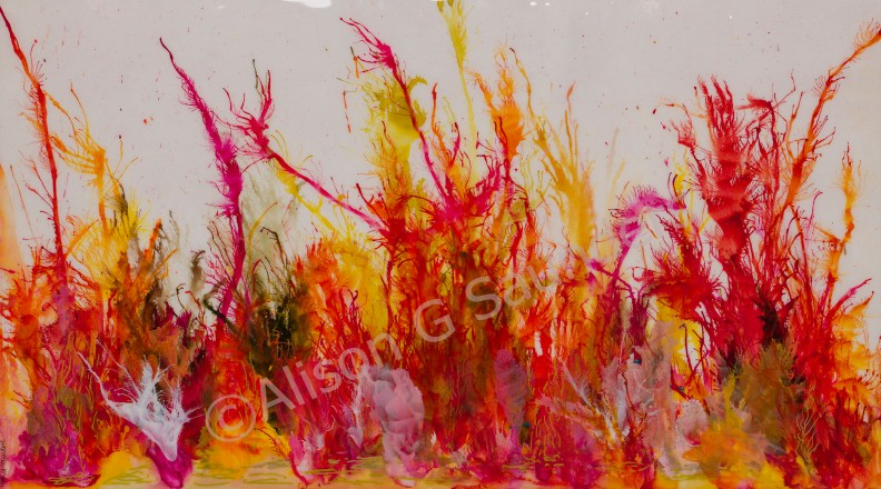 1249 red coral watermaked