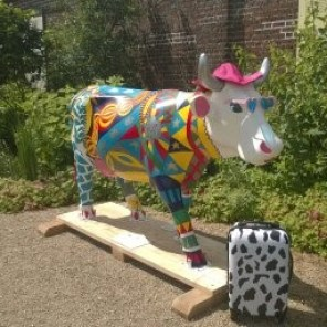 cow for blog