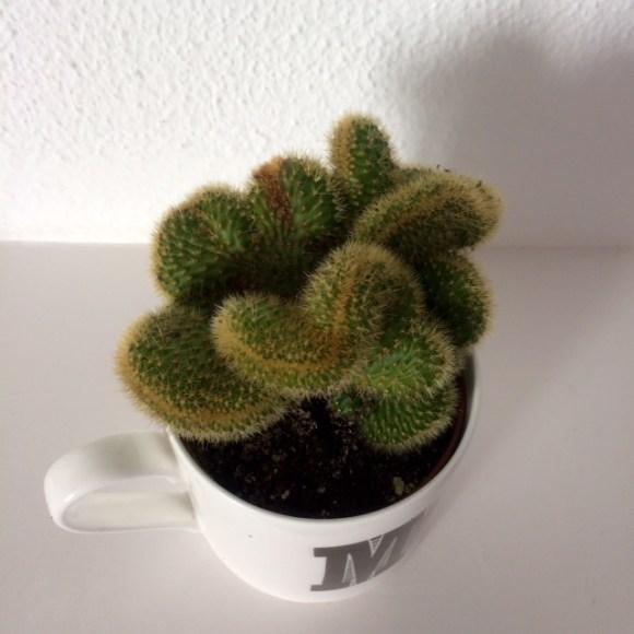 Cactus in mug
