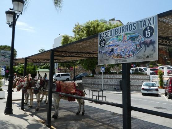 Burro taxi waiting area