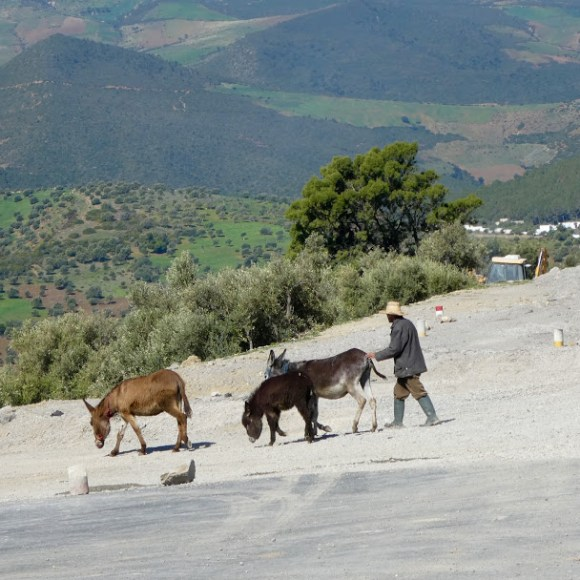 Moroccan with donkeys