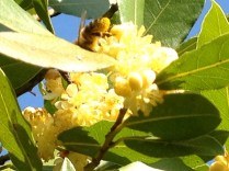 Bees=Pollination=Fruit=Sustainability