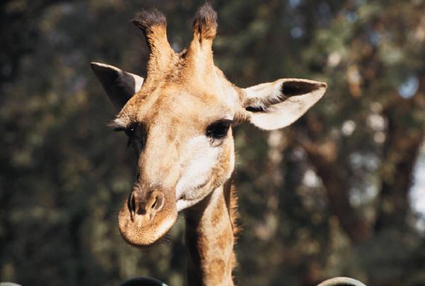 Would love to write but my pet giraffe needs walking