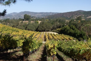 Robert Craig Affinity Vineyard