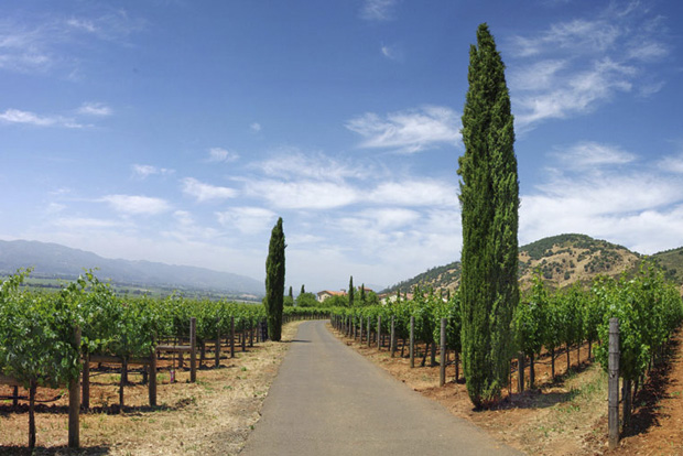 Dalla Valle Vineyards3
