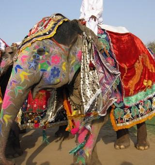 Holi Elephant Festival in Jaipur, India