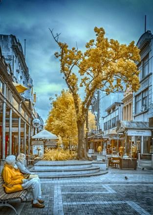 Tree in Cuba Mall