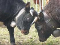 Frida and Reinette lock horns