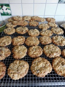 23 Cranberry and white chocolate biscuits