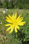 9 Yellow flower