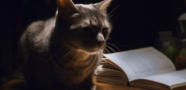 10 updated new year's resolutions for a little blue book cat