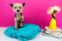 DIY No Sew Pet Bed - A Little Craft In Your Day