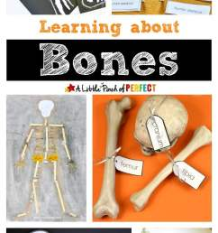 Learning about Bones - Fun Hands-on Activities for Kids - [ 1200 x 700 Pixel ]