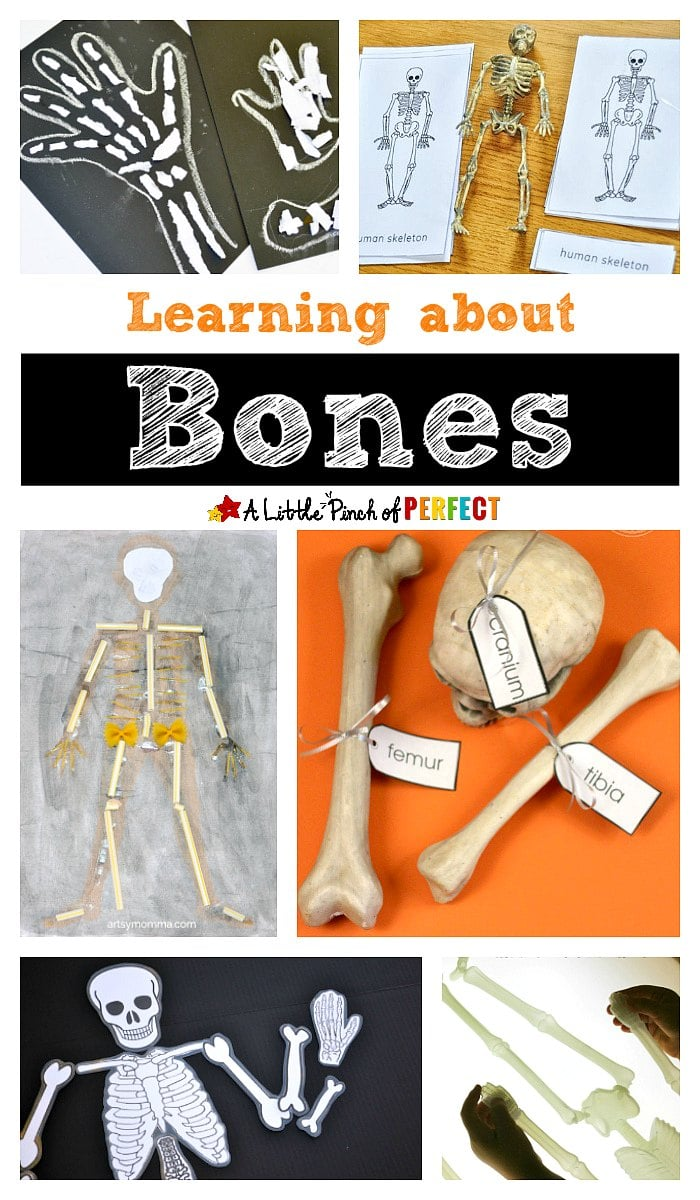 medium resolution of Learning about Bones - Fun Hands-on Activities for Kids -