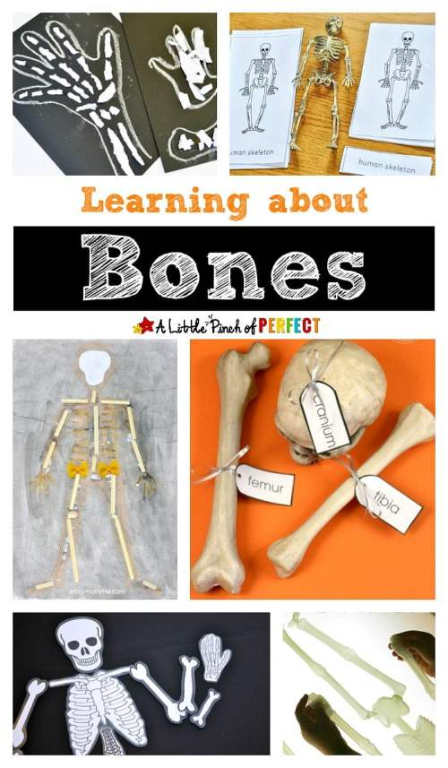 small resolution of Learning about Bones - Fun Hands-on Activities for Kids -