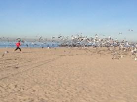 em chasing the birds, naturally