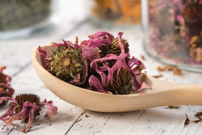 Wooden spoon of healthy echinacea petals and buds for making tea. Glass jars of dried coneflowers and medicinal herbs on background. Alternative medicine.
