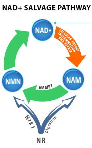 SUBLINGUAL NMN and NAD+ |