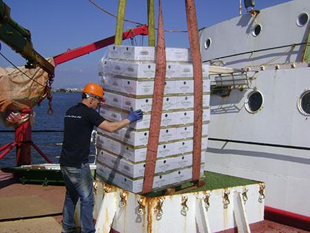 Embarque das 3 mil garrafas no navio 450