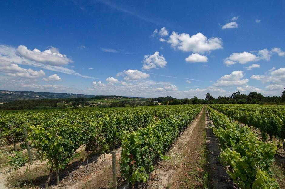 Casa-de-Santar-Winery-Vineyards-000