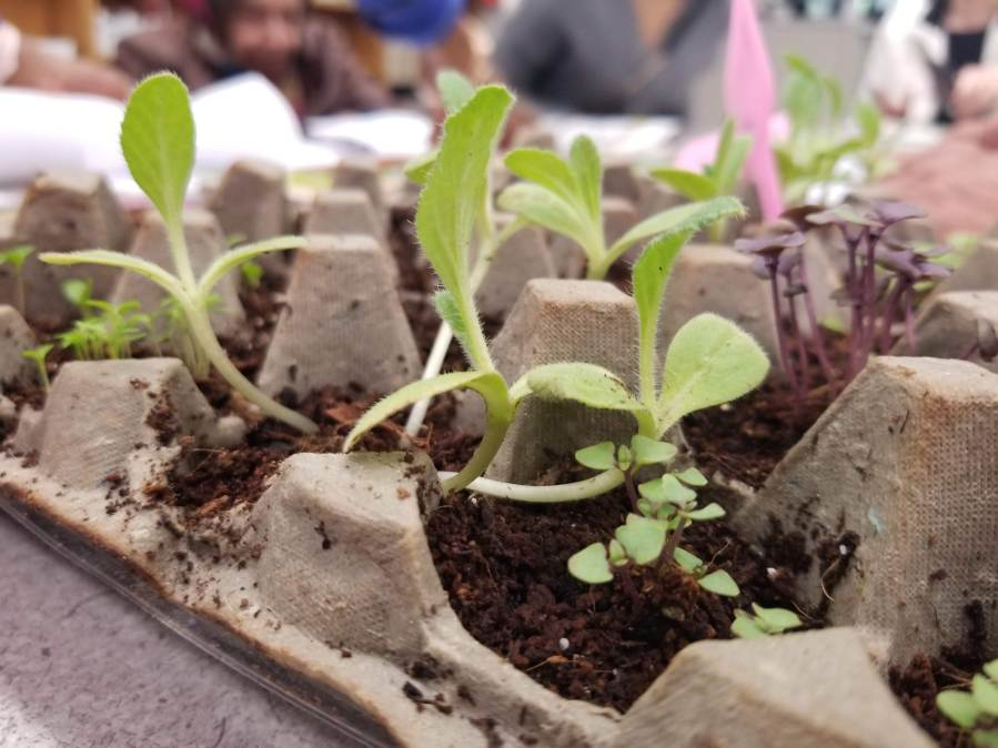 2nd organic gardening workshop_RI Living Library & Think Park