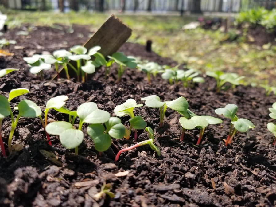 New seedlings coming up in RI Living Library & Think Park