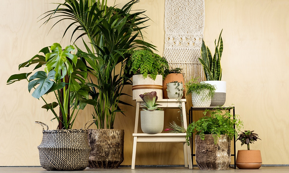 Decorate your rooms with plants - Transform your home into a tropical paradise | Aliz's Wonderland