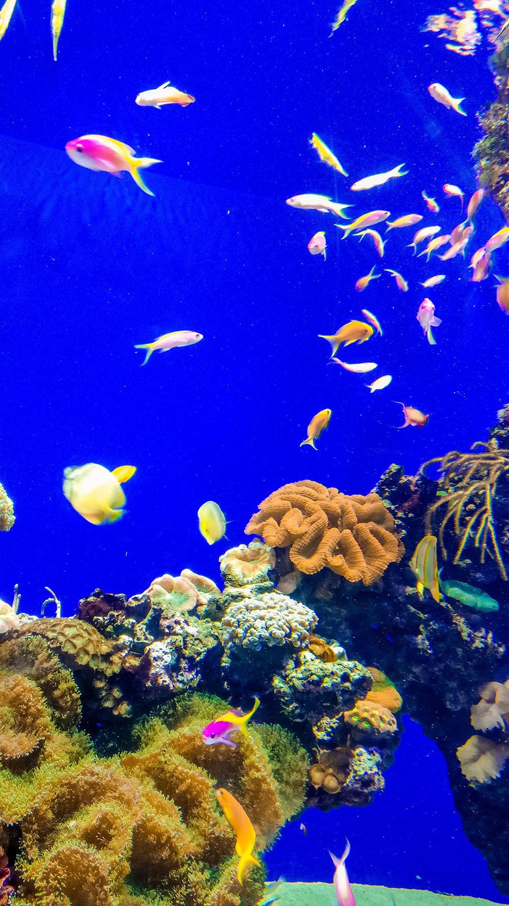 National Aquarium Denmark - Copenhagen 3-day travel itinerary | Aliz's Wonderland