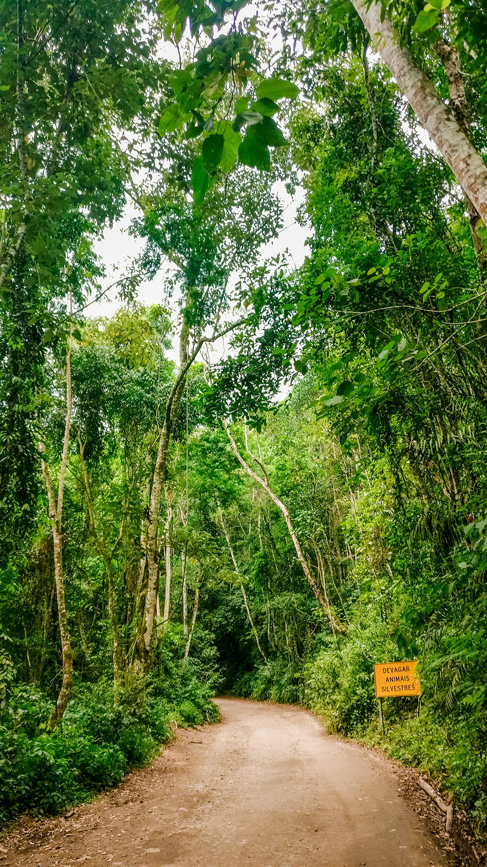 The Brazilian jungle - How to spend 3 days in Ilhabela, Brazil? | Aliz's Wonderland