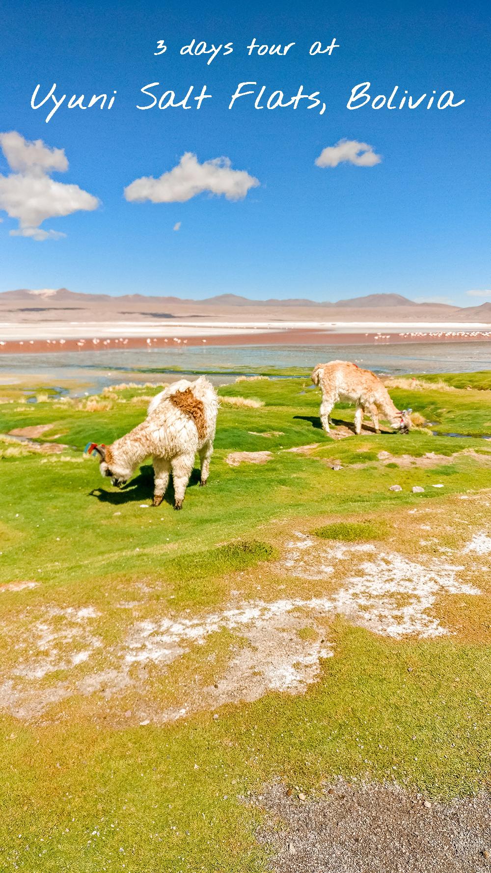 3 days tour at Uyuni Salt Flats, Bolivia - How to pick the best Uyuni Salt Flats tour? | Aliz's Wonderland