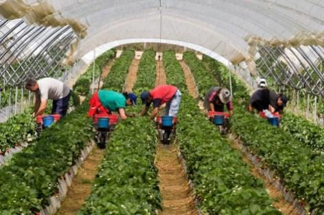 إسبانيا تشرع في الاستعانة بأكثر من 10 آلاف عامل مغربي قبل 2 فبراير