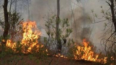 قرمبالية: إندلاع النيران بجبل سيدي طريف