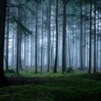 Thrilling and Mysterious Pictures of Slovenian Forests