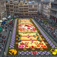Flower Carpet Made of 600.000 Blooms in Brussels