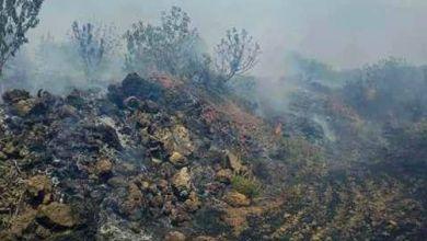 Photo of لليوم الثاني .. التنظيمات المتشددة تحرق الأراضي الزراعية بحضر في القنيطرة