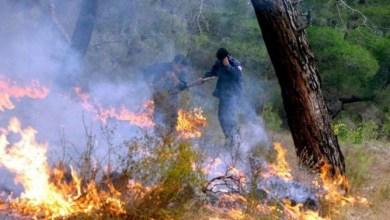 Photo of إخماد 22 حريقاً في اللاذقية خلال أقل من 24 ساعة