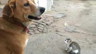 "Photo of جدل حول تصدير الكلاب والقطط السورية إلى موائد الآسيويين .. و""الشالط "" يتراجع!"