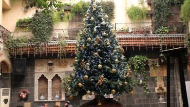 "Photo of ""سوف لن نشتري هذا العيد شجرة"".. لأن سعرها ""صار نص مليون"""