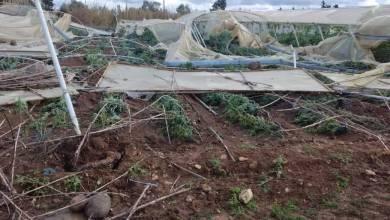 Photo of يوم جمعة قاسٍ في طرطوس .. تنين بحري وتخريب مزروعات وفيضان
