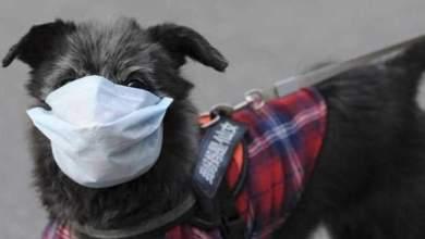 Photo of دراسة تكشف نوعا جديدا من كورونا منشأه الكلاب