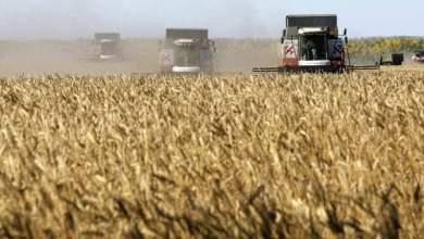 Photo of روسيا تعتزم توريد مليون طن من القمح إلى سوريا في 2021