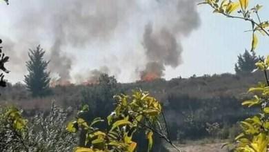 Photo of ١٥٠ دونما زيتون وحمضيات حصيلة حريق واحد في اللاذقية